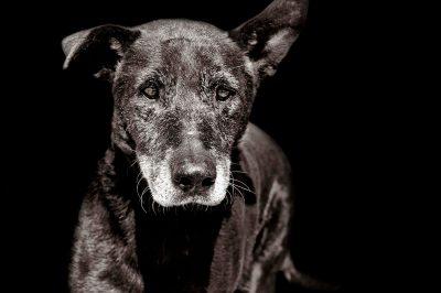 Fotografia de Mascotas en Lanzarote