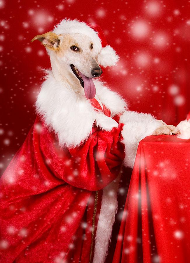 Fotografia de Mascotas en Lanzarote por Navidad